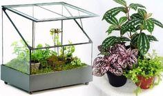 Amazon.com: Fairy Garden Terrarium with Door - Wardian Case - War153 with 3 Plants/Soil/Moss: Patio, Lawn & Garden
