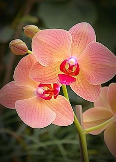 163 Beautiful Types of Flowers + A to Z With Pictures - Orchidee und kaktus Unusual Flowers, Types Of Flowers, Amazing Flowers, Beautiful Flowers, Orquideas Cymbidium, Pink Orchids, Orchid Flowers, Phalaenopsis Orchid, Moth Orchid