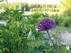 lovely purple&white