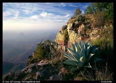 An Agave cactus on the South Rim of Big Bend NP, Texas Texas Photography, Landscape Photography, Wonderful Places, Great Places, Amazing Places, Places To Travel, Places To Visit, National Parks Usa, Picture Photo