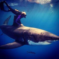 Ocean Ramsey - Shark conversationist, model
