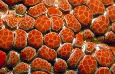 starfish close up