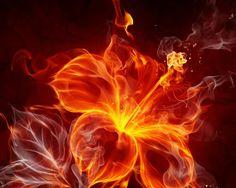 A fire flower  how cool