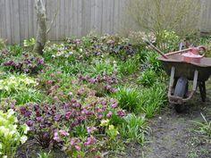10 Best Perennials for Shade >> http://www.diynetwork.com/how-to/outdoors/gardening/10-best-perennials-for-shade?soc=pinterest