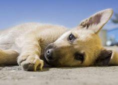 A Netpincér a kutyákra is gondolt – Rendelj ételt árva négylábúaknak