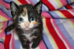 Catladyland: Cats are Funny: Kitten Season is Upon Us! #FoodShelterLove #Sponsored