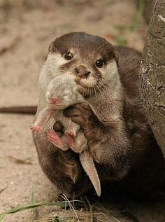 Momma and baby otter