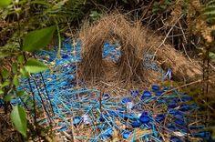 Un verdadero nido de amor