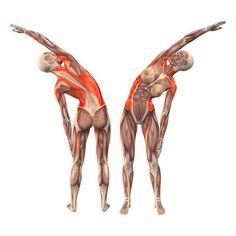 One-arm advanced left bend - Konasana advanced one arm left - Yoga Poses | http://www.dralexjimenez.com/types-of-slap-lesions-and-treatment/