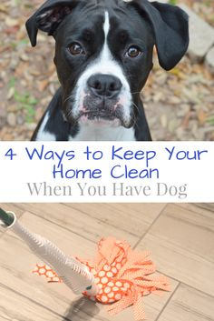 4 Ways to Keep Your Home Clean When You Have Dog #LibmanSpringCleaning #ad | mybigfathappylife.com