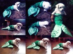 Pocket : 猫に人魚のコスチュームを着せてみたら…モーレツにかわいい写真12枚