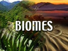 This is a picture of the four different biomes ther are aquatic, tundra, desert, and grassland. Rainforest Biome, Desert Biome, Desert Climate, Third Grade Science, Earth Surface, Teaching Science, Science Classroom, Life Science, History Classroom