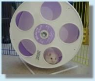 wodent exercise wheel for Syrian hamsters. This wheel is needed for syrians
