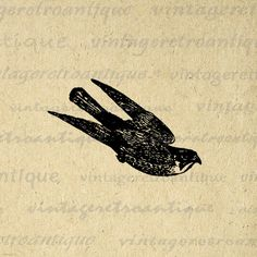 Printable Flying Hawk Bird Image Digital Illustration Graphic Download Antique Clip Art. Digital graphic illustration for printing, fabric transfers, t-shirts, pillows, tea towels, and many other uses. This image is high quality, large at 8½ x 11 inches. A Transparent background png version is included.