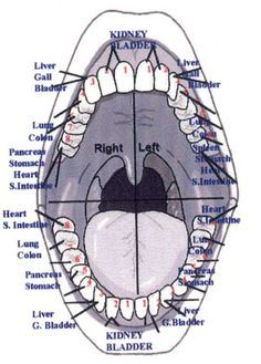 Teeth and Acupuncture Meridians - We can give energy to the teeth & have beneficial effect on the meridians! Acupuncture Benefits, Acupuncture Points, Acupressure Points, Acupressure Therapy, Reflexology Points, Ayurveda, Holistic Medicine, Natural Medicine, Holistic Healing