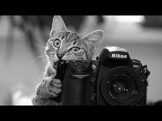 Уроки Фотографии для Начинающих. Экспозиция - YouTube
