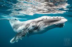 Marine Life - Karim Iliya Photography