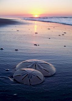 Sunset and Sand Dollars ♠ re-pinned by  http://www.waterfront-properties.com/jupiteradmiralscove.php
