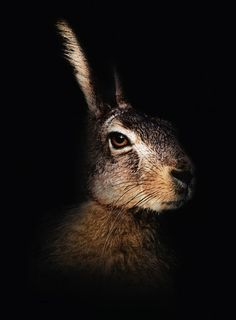 """The Easter Bunny is not a bunny or rabbit at all, but is actually a hare, the sacred animal of Eostre (or Oestra/Ostara), the ancient Teutonic Goddess of the Spring Moon. At the vernal equinox (March or April) the hares go 'mad' and at this time of year, one of Eostre's hares laid an egg, the Egg of New Life, or the """"Easter"""" Egg."""
