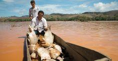 Homem recolhe peixes mortos no rio Doce, em Baixo Guandú, estado do Espírito Santo, Brasil, após lama com rejeitos de barragem de mineração que se rompeu ter atingido o rio. O rompimento da barragem da mineradora Samarco, em Minas Gerais, causou grande impacto ambiental na região do rio Doce.  Fotografia: Jovander da Silva / Futura Press / Estadão Conteúdo.  http://noticias.uol.com.br/meio-ambiente/album/2015/11/19/impacto-da-lama-no-rio-doce.htm#fotoNav=25