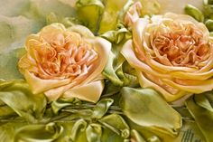Another close-up of Ingrid Lee's roses
