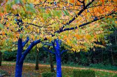 Smurf Trees by Konstantin Dimopoulos