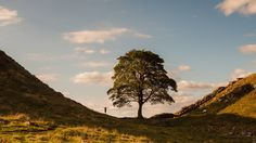 https://flic.kr/p/x8r5wA | Im Bigger Than You | Just got back from holiday in Nortumberland, could not resist posting this image of Sycamore Gap with the help of my son.