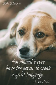 An animal's eyes have the power to speak a great language. Marin Buber Quote | Dog Quotes: Reflections on Our Canine Companions | #Dog #Quotes #ANimals #Pets #Canine