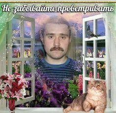 Best Memes, Dankest Memes, Love Massage, Hello Memes, Funny Valentines Cards, Russian Humor, Happy Pills, Work Memes, Me Too Meme