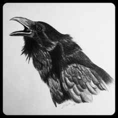 Black crow. One of my first crow drawings.