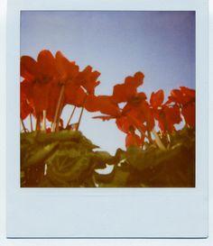 flowers, spring, sun, polaroid