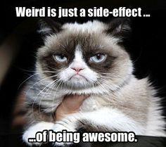 Grumpy Cat explains life.