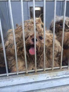 ***EMERGENCY - DEVORE SHELTER IS ASKING FOR HELP AFTER TAKING IN MORE THAN 50 DOGS AND CATS FROM A HOARDER CASE. RESCUES/FOSTERS/ADOPTERS NEEDED**  More than 50 Dogs and Cats Surrendered in Animal Cruelty Case, Crowded Shelter Makes Plea to Adopters and Rescues