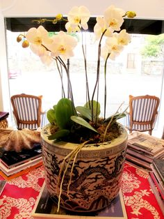 orchid in fake Chinese vase