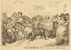 THOMAS ROWLANDSON, the wonderful pig, 1785