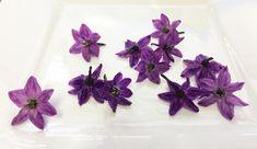 Flower Micro Pepper Flower Purple™  edible flowers for decorating cake
