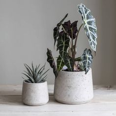 Set of two cement plant pots.Available in two colour combinations and slightly different styles, these set of two plant pots are a very stylish and organic way to show off your indoor or outdoor plants. Set of two cocoa or stone coloured pots look stunning on coffee table, dining table or in any spot that needs a little modern but natural touch. Stone colour has slightly tapered sides, cocoa has straight sides.CementCocoa small: H 11.5cm x Dia 12cm; large H 14.5cm x Dia 15cm Stone small: H…