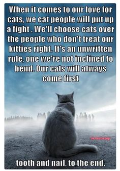 When it comes to our love for cats, we cat people will put up a fight. We'll choose cats over the people who don't treat our kitties right. It's an unwritten rule, one we're not inclined to bend. Our cats will always come first.tooth & nail to the end. Cool Cats, I Love Cats, Crazy Cat Lady, Crazy Cats, Jiff Pom, Gatos Cool, Amor Animal, Cat Quotes, Quotes About Cats