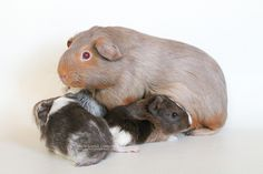 Toffee and her babies - by Marie-Sophie Germain - www.mariesophiegermain.com