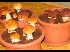 Most people who go in for mushroom growing just go out and buy both the spores (or spawn) and the growth medium. They do this because this is the easiest way to grow mushrooms. But if you are thinking of growing mushrooms commercially Porcini Mushrooms, Stuffed Mushrooms, Herb Garden, Vegetable Garden, Container Gardening, Gardening Tips, Culture Champignon, Household Plants, Growing Mushrooms