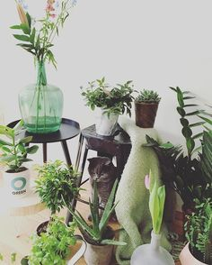 Urban Jungle Bloggers sur Instagram : In a few days we'll launch the March edition of #urbanjunglebloggers but ohhhhh how we loved February's #jungleanimals !  :@isabelheijtlager