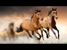 Brown Horse Stallion Mustang RV Trailer or Wall Mural Decal Decals Graphics Sticker Art by SuperbDecalsLLC on Etsy Horse Wallpaper, Animal Wallpaper, Wallpaper Backgrounds, Widescreen Wallpaper, Computer Wallpaper, Black Wallpaper, Wallpaper Downloads, Photo Wallpaper, Pretty Horses