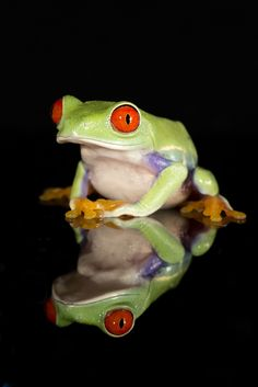Red eyed tree frog by Angi Nelson.