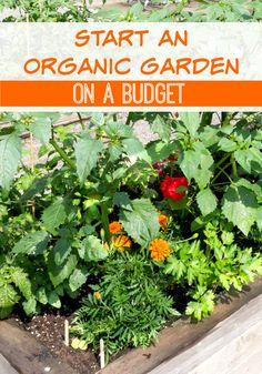 Start an Organic Gar