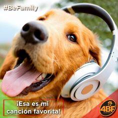 Al salir de casa, me puedes poner música mientras disfruto el día / When you leave home, you can put me music while i enjoy the day 🎧😌🐶#BeFamily#4bf #friends#happy#music#happyday #bestfriend#mejoramigo