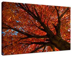 "11"" x 14"" Canvas Gallery Wrap Nature Photograph: Shimmering Orange Autumn Tree. View all of the stunning Nature Photos by Landscape and Nature Photographer Melissa Fague at:  https://www.etsy.com/shop/PIPAFineart Limited edition fine art nature photography prints and Traditional Photo Prints for wall decor are also available in a variety of sizes."