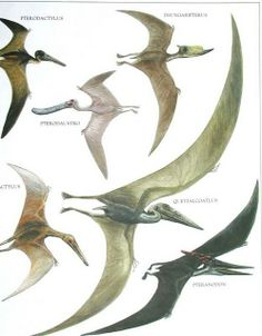 Pteranodon vs Pterodactyl   Some birds, some pterosaurs (which is which?)