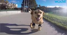 Dog with prosthetic legs run for the first time! Funny Pets, Funny Animals, Prosthetic Leg, The Funny, Puppies, Legs, Beautiful, Humorous Animals, Hilarious Animals