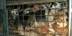 Chinese embassy refuses to accept petition signed by 11 million to end Yulin