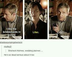 sherlock lilac